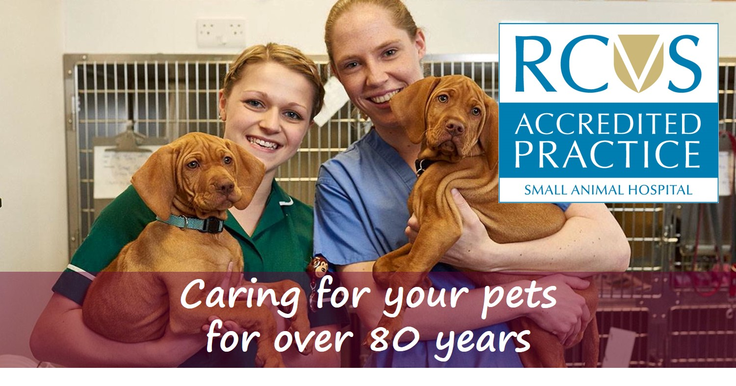 Caring for your pets for 80 years