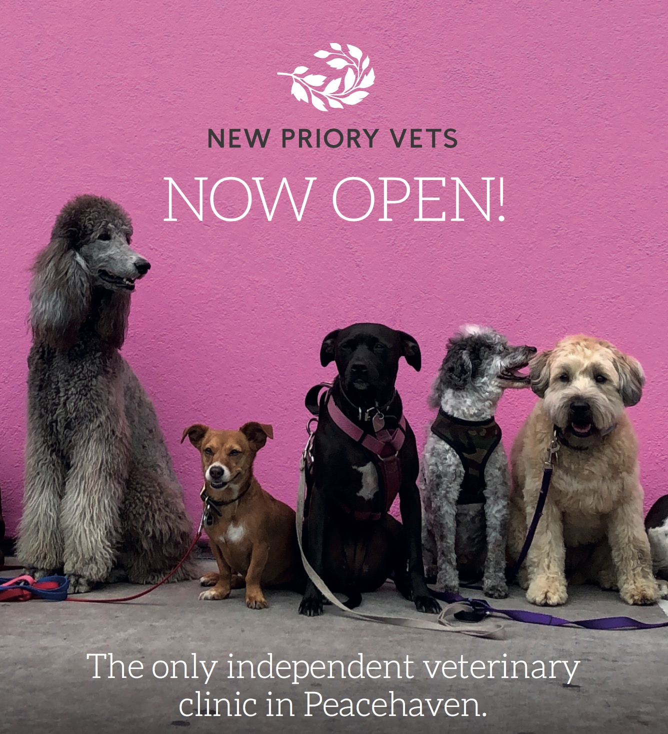 New Priory Vets - Peacehaven Clinic - Vet in Peacehaven, East Sussex