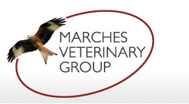 Marches Veterinary Group - Ludlow