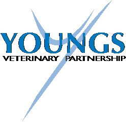 Youngs Veterinary Partnership - Peterborough