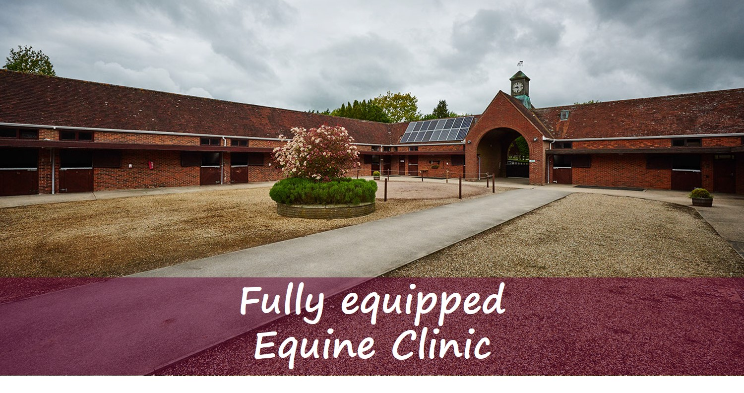 Equine Clinic