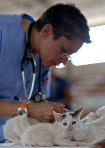Kitten being examined by vet