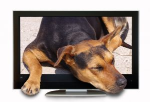 Dog on TV